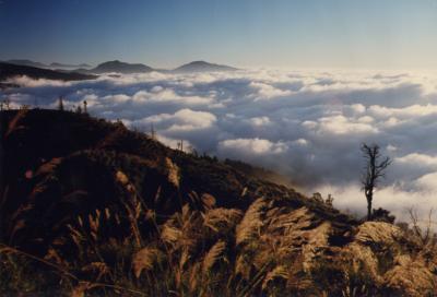 阿里山雲海003