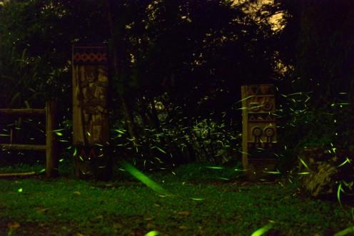2011年阿里山螢火蟲季