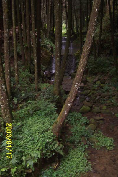 阿里山森林001